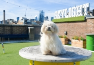 Dog Day at Skylight Rooftop @ Skylight Rooftop at Tobacco Dock