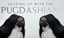 Someone Recreated The Keeping Up With The Kardashian Titles With Pugs