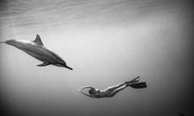 Underwater Photography By Wayne Levin