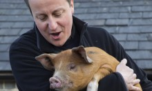 David Cameron Put His Dick In A Dead Pig