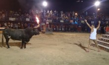 You Mess With The Bull, You Get The Flaming Horns