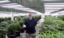 Inside the Tweed Cannabis Factory with 'The New York Times'