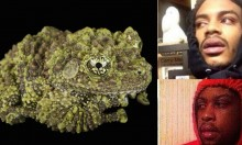 Green Frog Looks Like Dank Nug Of Skunk