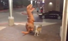 Dinosaur Takes Dog For A Walk