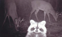 Terrifying, Inexplicable Nightvision Photos of Woodland Animals to Kick off Your Weekend