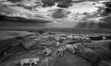 Wildlife Photographer of the Year @ Natural History Museum