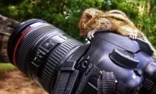 Best Squirrel Ever