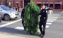 Man Dressed As Tree Arrested For Blocking Road