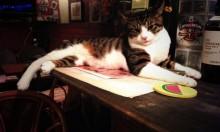 Get Super Fucked Up At Tokyo's Cat Pub