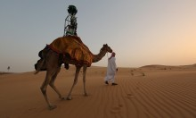 Google Straps Camera To Camel In Ongoing Bid To Conquer All Species