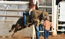 Mutton Busting - The Sport Of Kings