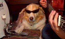 Best of Maple The Musical Dog