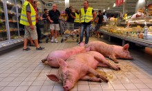 Protesting French Farmers Unleash Live Pigs In Supermarket