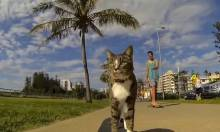 Fuck It, Have A Skateboarding Cat