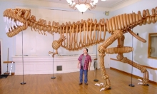 A Life-Size T-Rex Dinosaur Made Out Of Balloons