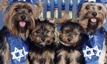Jewish Dogs