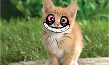 Meow Meow Illegal
