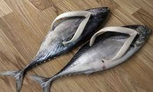 Fashion for 2011