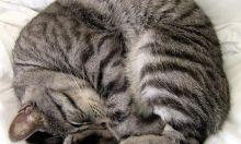 Cat holic