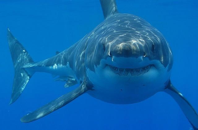 Virtual Reality Sharks