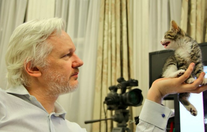 Wikileaks's Julian Assange Has Got Himself A Cat