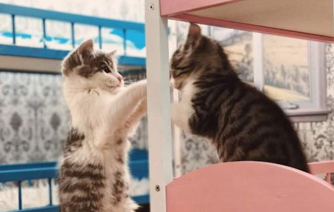 Keeping Up With the Kattarshians, The Reality Show About Kittens