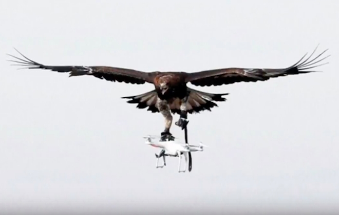 French Army Eagles Are Being Trained To Hunt Drones
