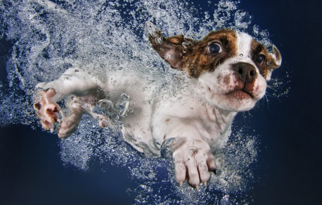THAT'S RIGHT INTERNET GIMME THEM DOGS UNDERWATER PICS