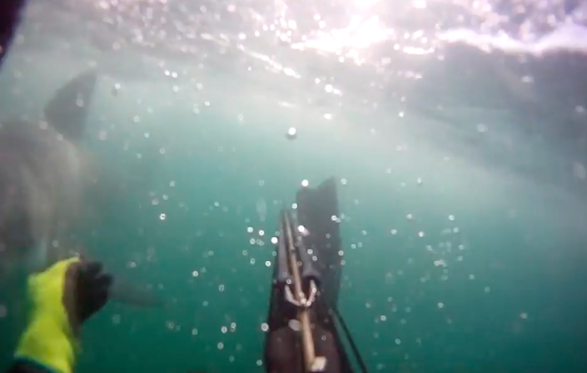 Jaws In Real Life: Great White Shark Attack Filmed On Go Pro