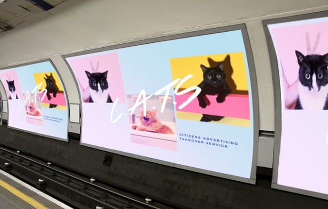 This Kickstarter Is Aiming To Replace A Tube Station's Adverts With Cat Pictures
