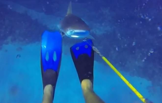 GoPro Wearing Diver Narrowly Escapes Shark Attack