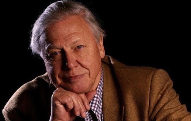 Who'll be the next David Attenborough?