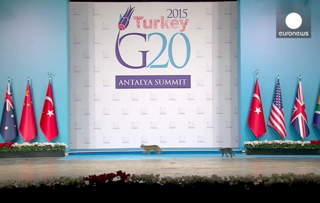 Cats Invade Stage At G20 Summit