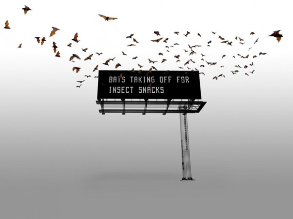Bat-interpreting Billboard